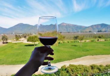 Rota do Vinho no Chile