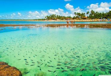 porto de galinhas peixes